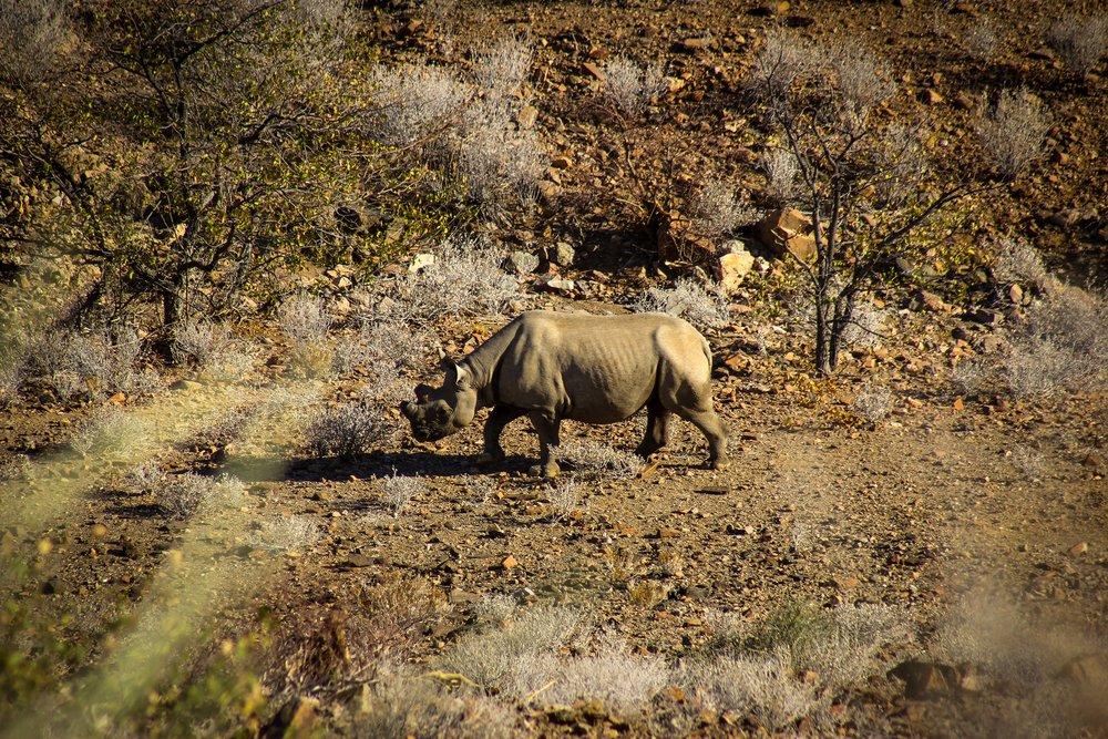 Damaraland Rhino Tracking.jpg