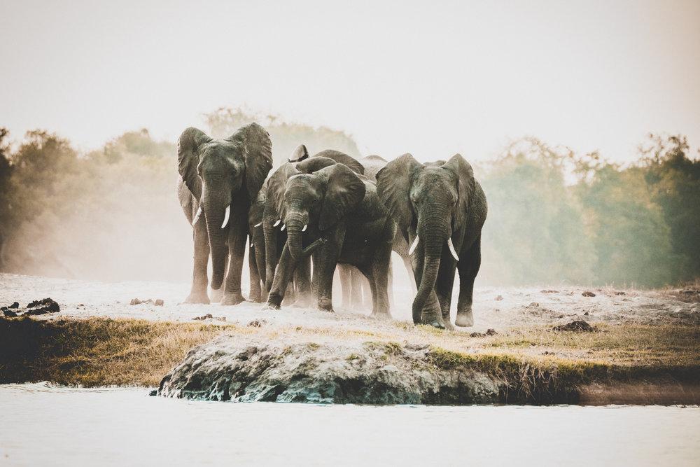 Chobe Nationalpark.jpg