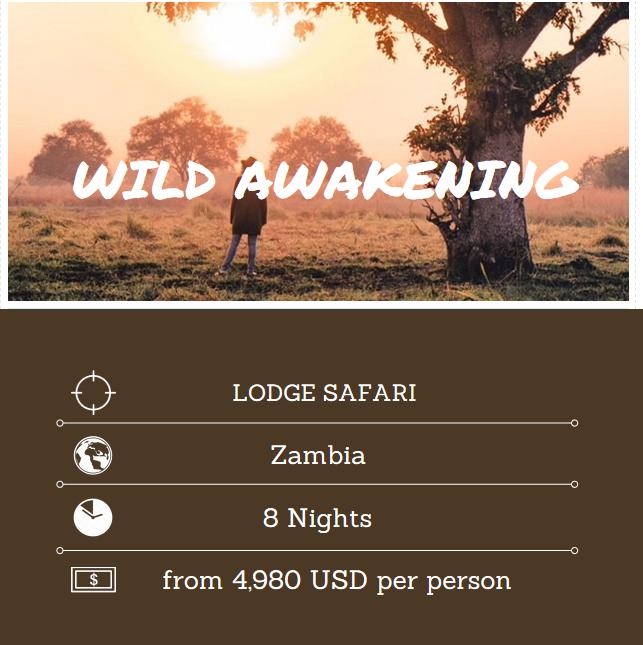 Wild Awakening Eng.PNG