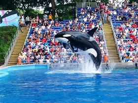 SeaWorld  at San Antonio, TX