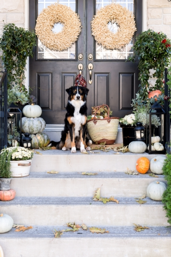 fall porch with dog