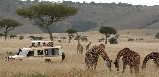 tanzania_safari_Serengeti_Ngorongoro crater