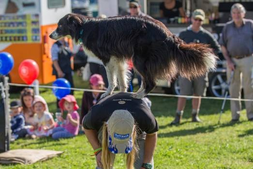 The ultimate canines dog show