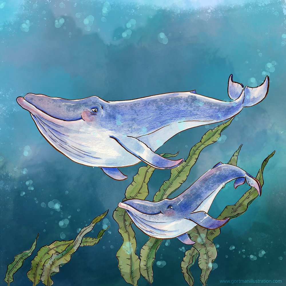 Animal-Alphabets---Blue-Whale---gortmanillustration.jpg