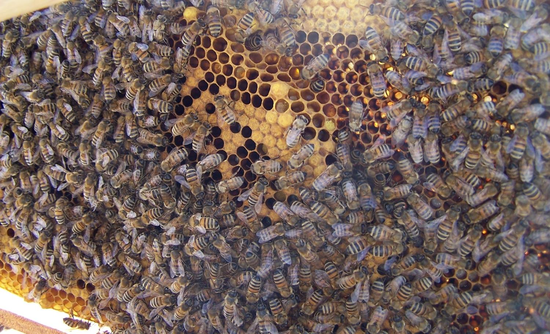 adelaide beekeeping supplies