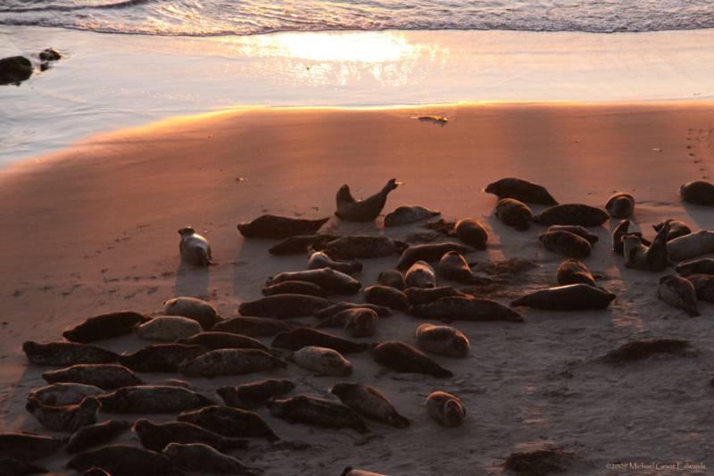 Seal Beach in Carpinteria