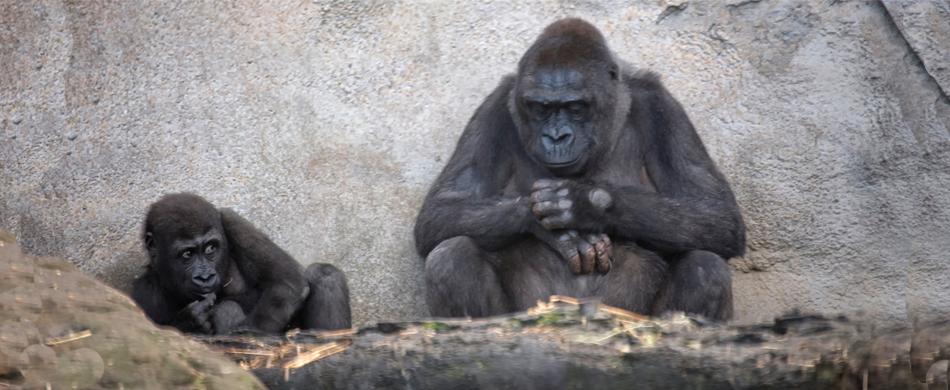 ckeeky monkey.jpg