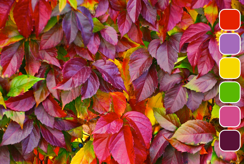 beautiful-leaves-1350580.jpg
