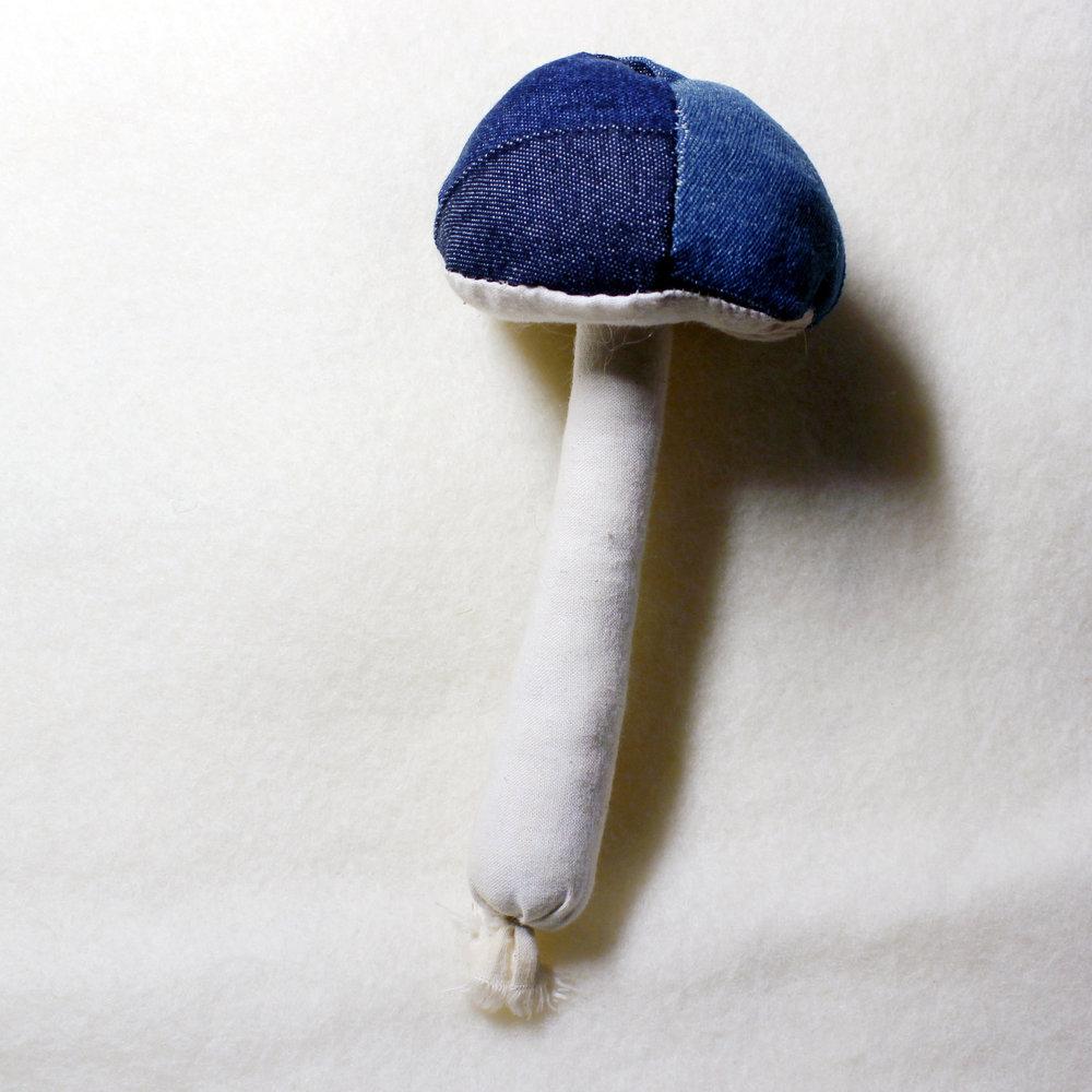 blue jean mushroom - star magnolias