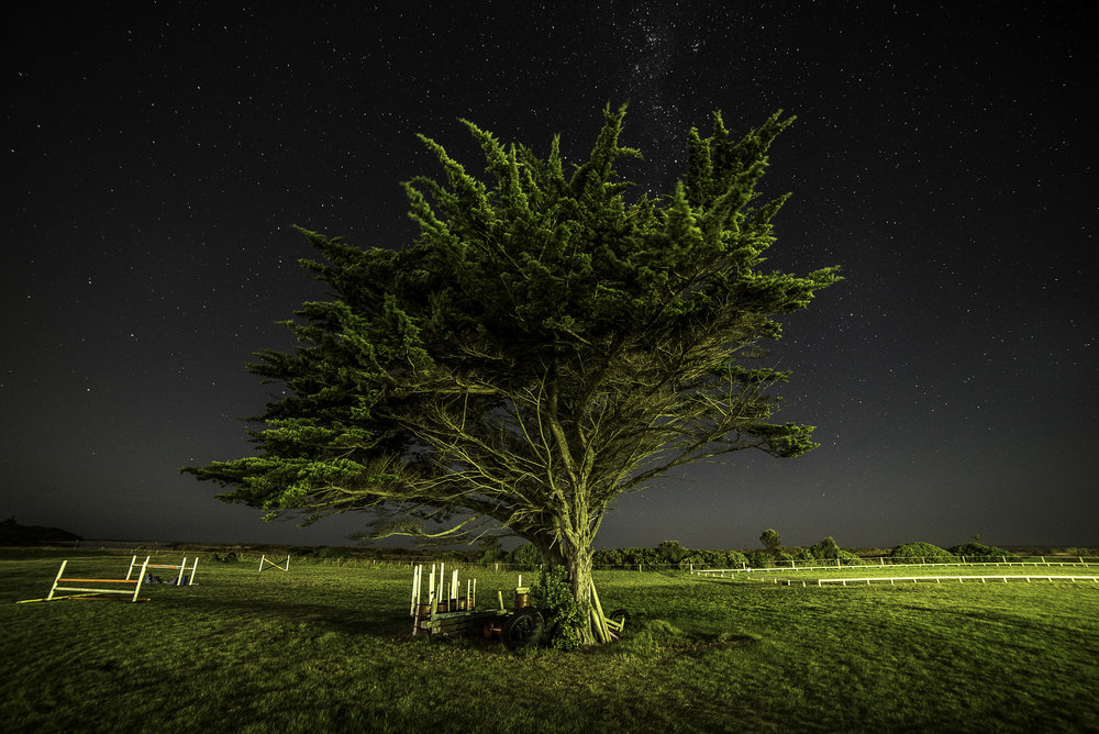night tree (1 of 1).jpg