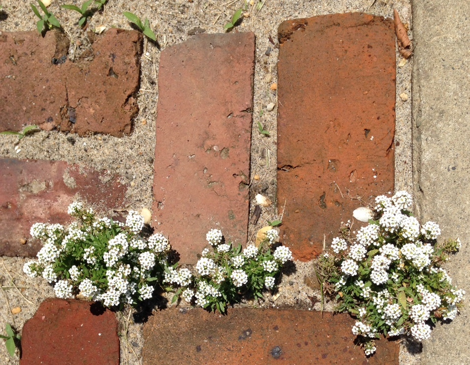 Photo of flowers in brick