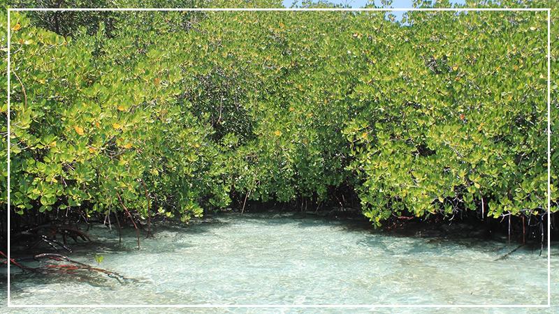mangrove-forest-nusa-lembongan.jpg