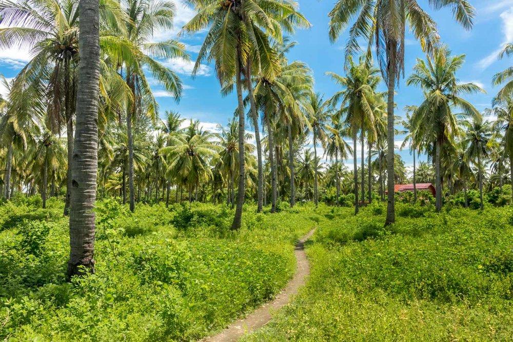 Palm-trees-Gili-Meno.jpg