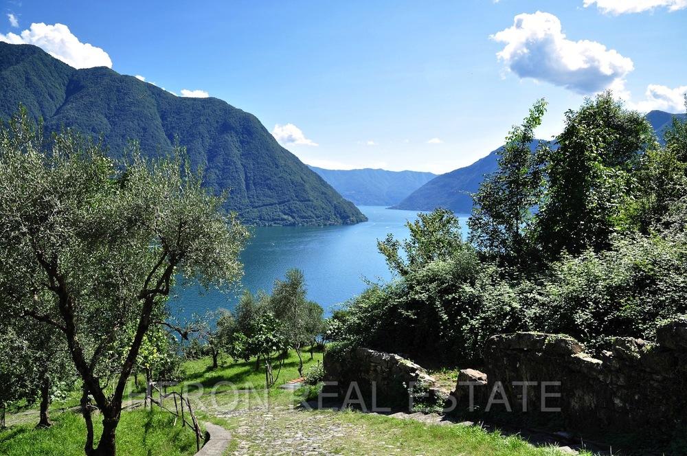 olive Lake Como