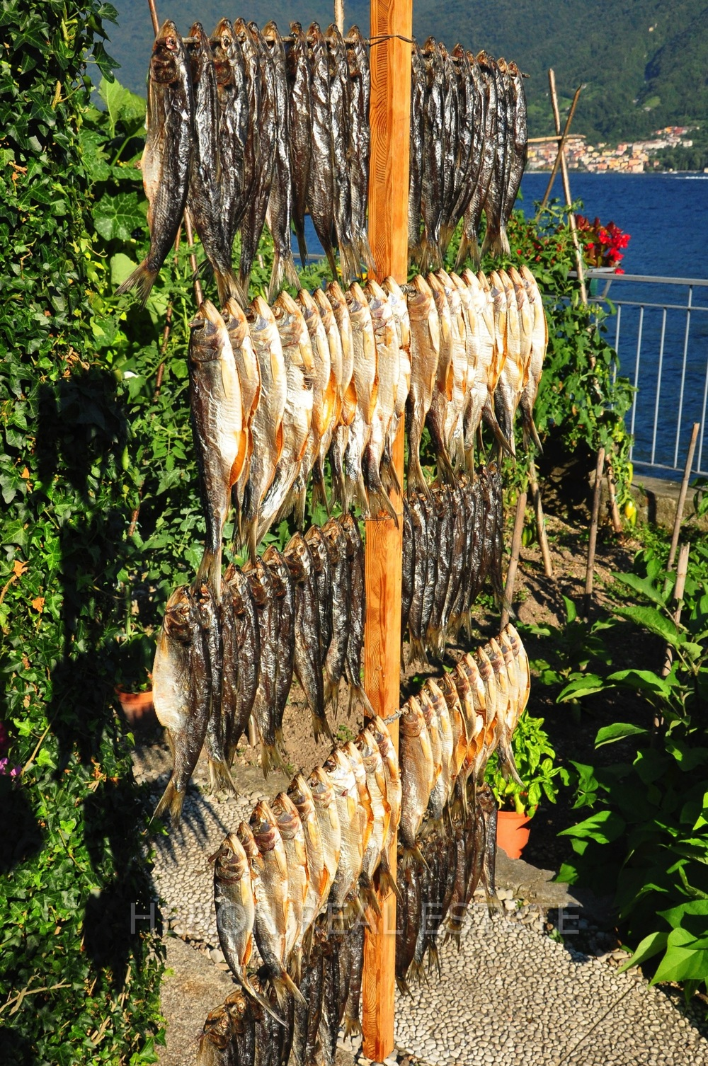 missoltini Lake Como speciality