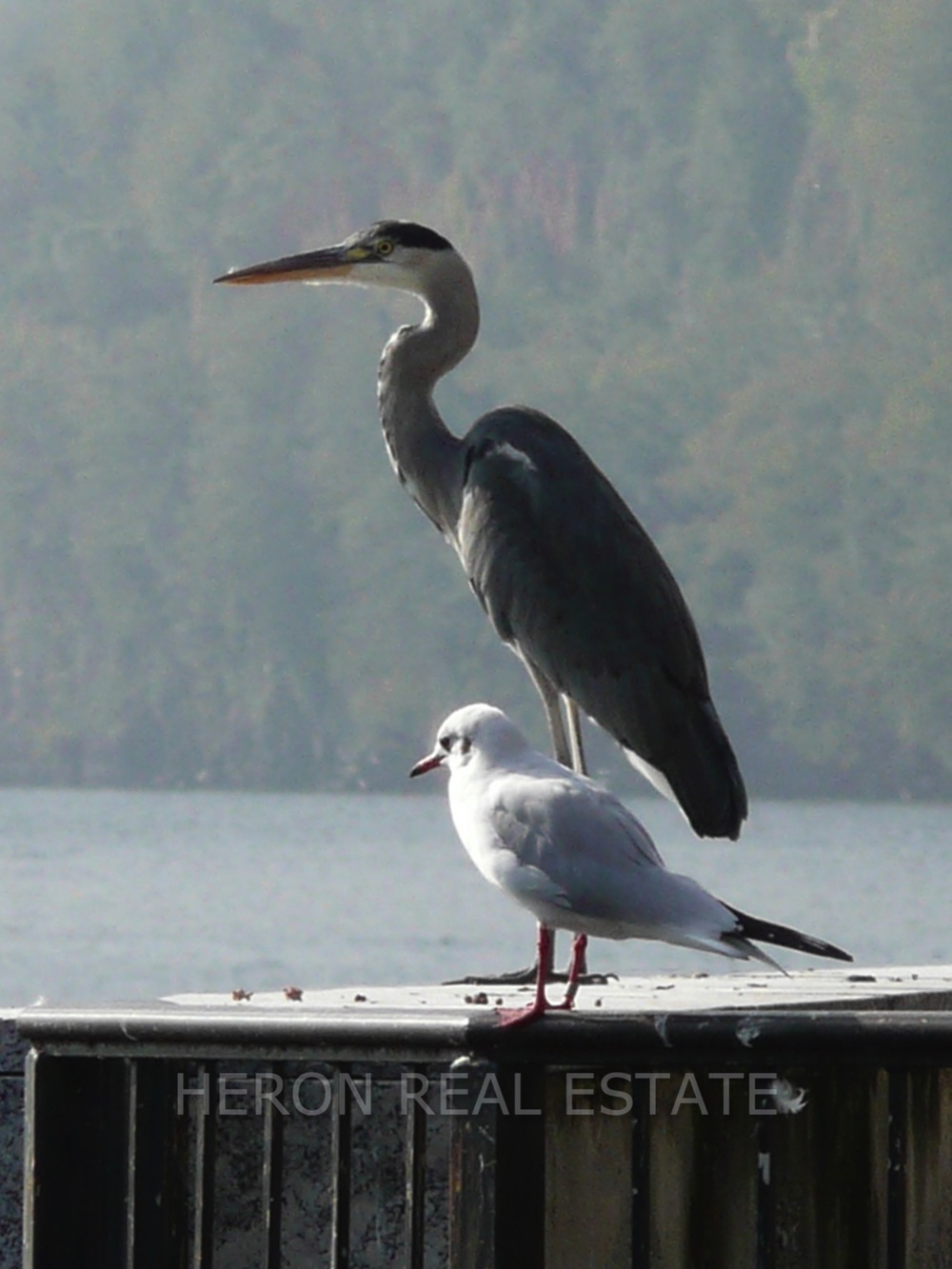 Heron Lake Como