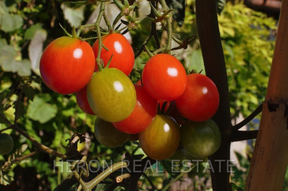 tomatoes Lake Como