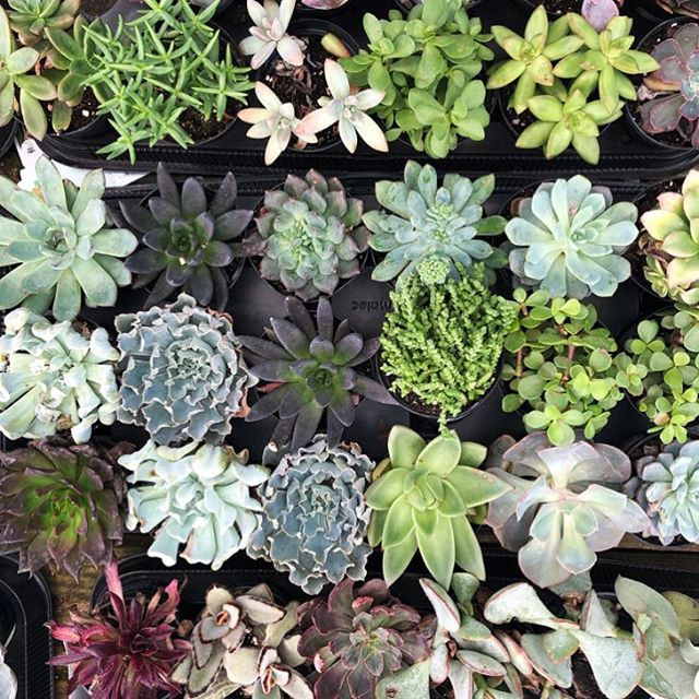 So who are we and what do we do? Well first and foremost we are lovers of succulents.✌🏻️❤️🌿 We just think they add the perfect pop of life to any room, but we are TERRIBLE at keeping them alive. Any tips would be greatly appreciated. But more importantly Hustle + Grace Co. is a boutique marketing firm designed for the modern entrepreneur. We know how much passion you have put into your business and we want to help your business reach it's full potential. In the busy life of an entrepreneur, marketing is usually one of the first things to get cut, but that's where we step in. We treat each and every business we work with like it's our own so that you get the marketing expertise your business deserves. Our goal is to hustle with grace and grow your business with integrity. #succelents #hustlewithgrace #boutiquemarketing