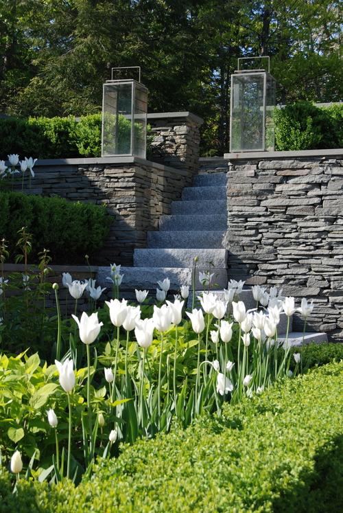 Triumphator Tulips Robin Kramer Garden Design  http://www.robinkramergardendesign.com/rkgd-blog/
