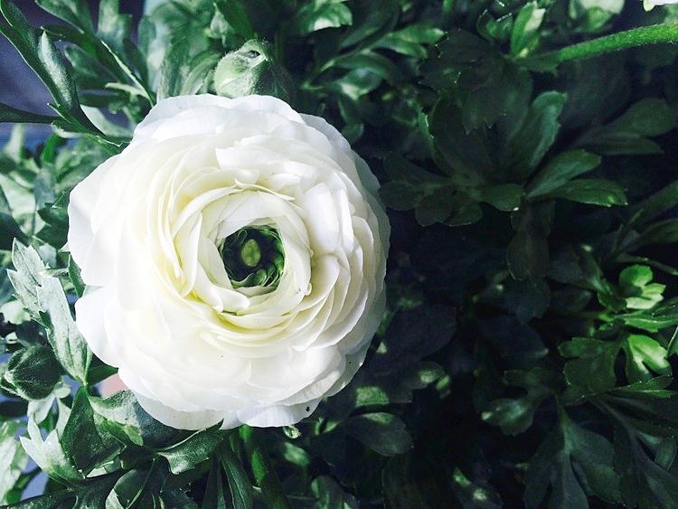 Ranunculus Robin Kramer Garden Design Blog http://www.robinkramergardendesign.com/rkgd-blog/