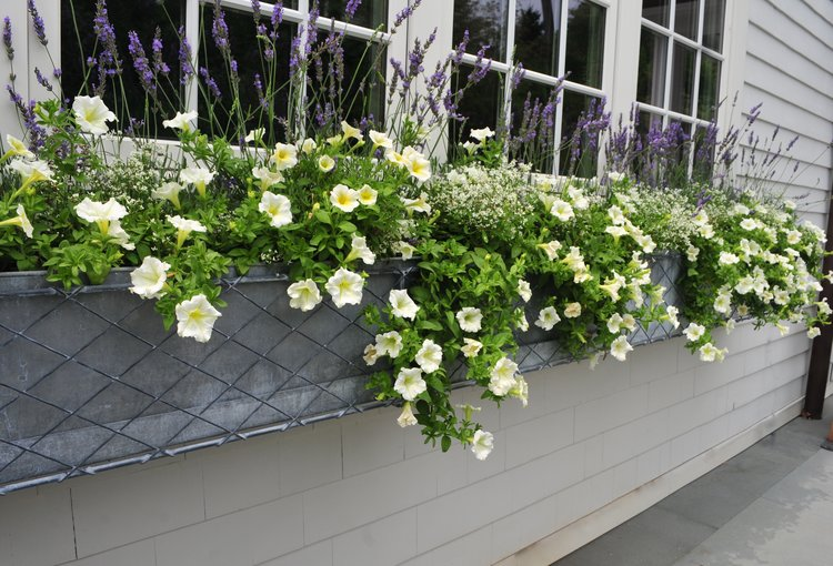 custom window boxes robin kramer garden design blog