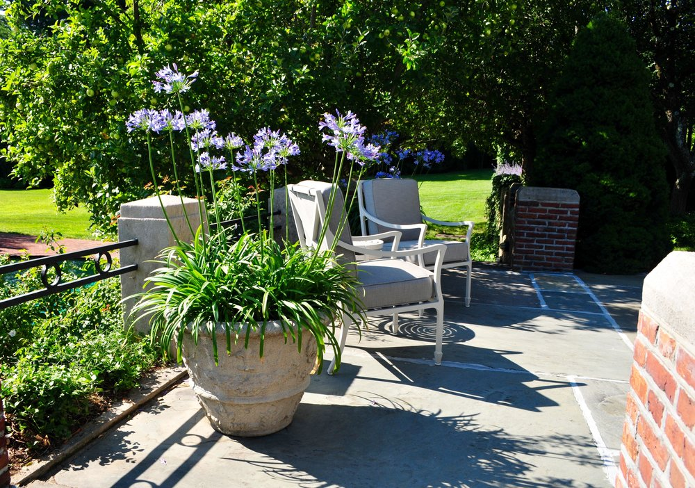 agapanthus in planting container robin kramer garden design blog httpwwwrobinkramergardendesign