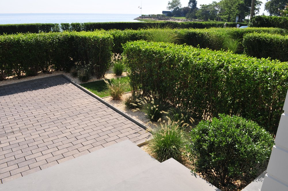 The Privet hedge succeeds in screening the road as seen from the front door