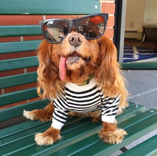 Celebs Who Love Us — Social Tees Animal Rescue
