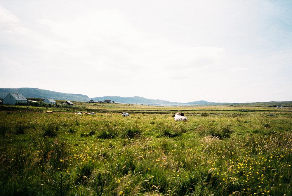 Scotland-Trip-Day3-5-50.jpg