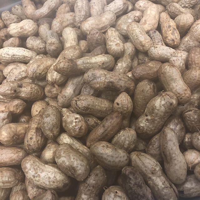 Boiled peanuts coming soon!