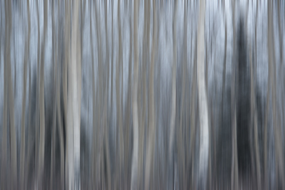 Winter Dance—ICM Photography—Horizontal Movement—Fast