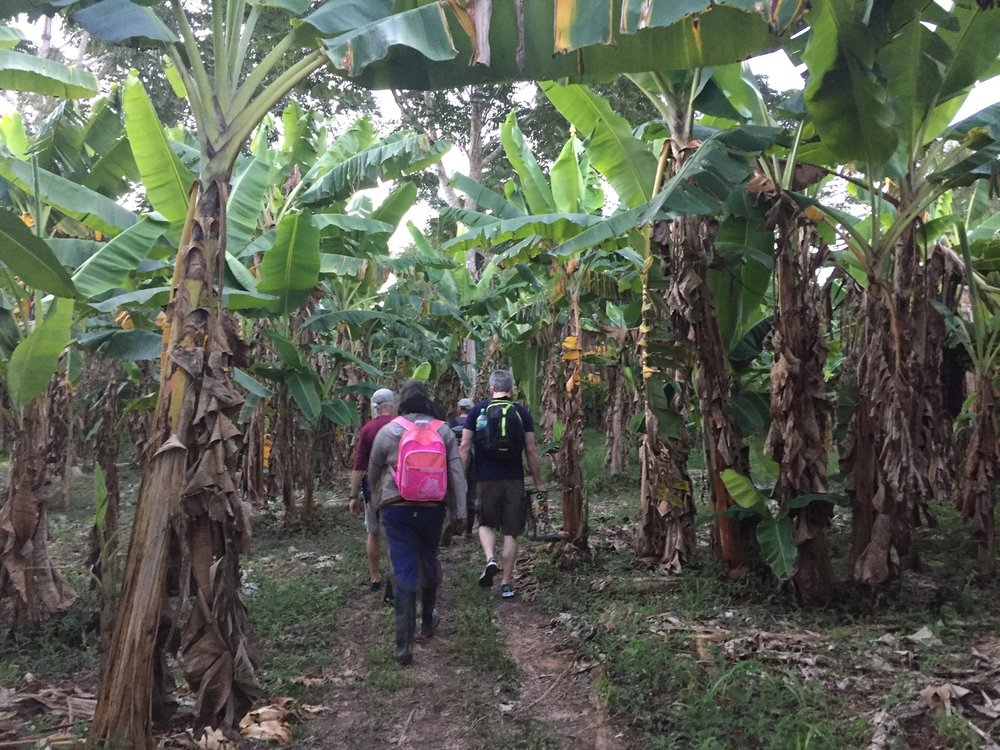 Banana Trees - Jungle Hike