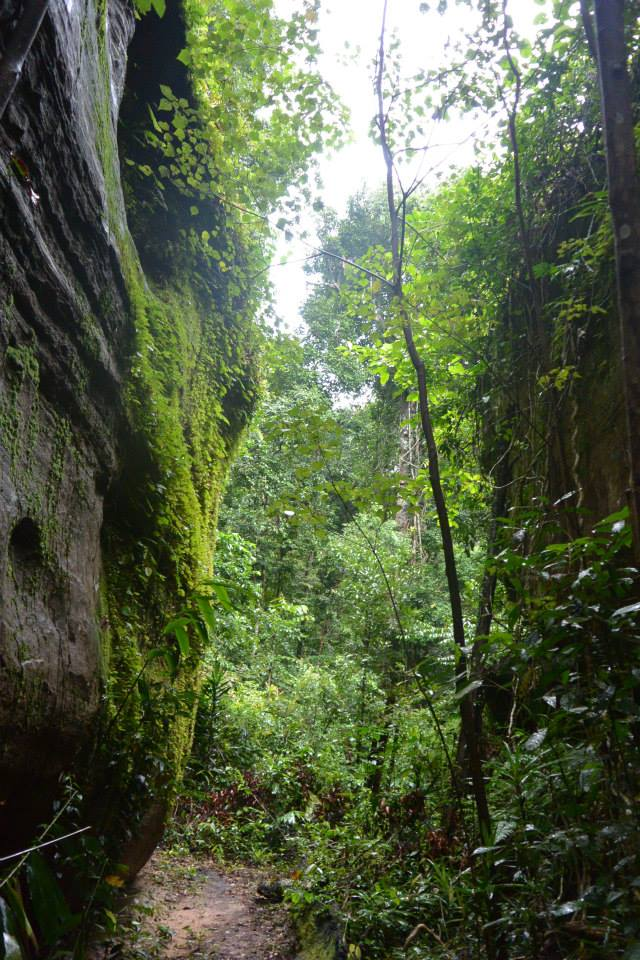 Phnom Kulen - Jungle Trek