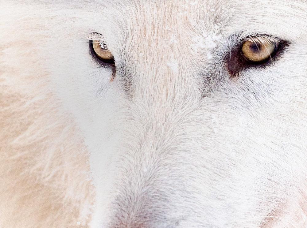 """Image Title: """"White Eyes"""""""