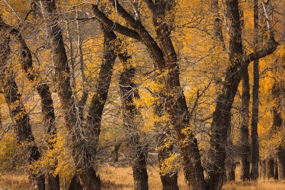 """Image Title: """"Autumn Foliage"""""""