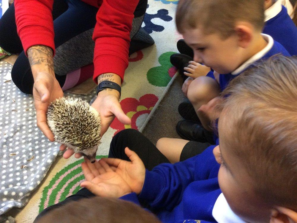 Hedgehogs 2.jpg