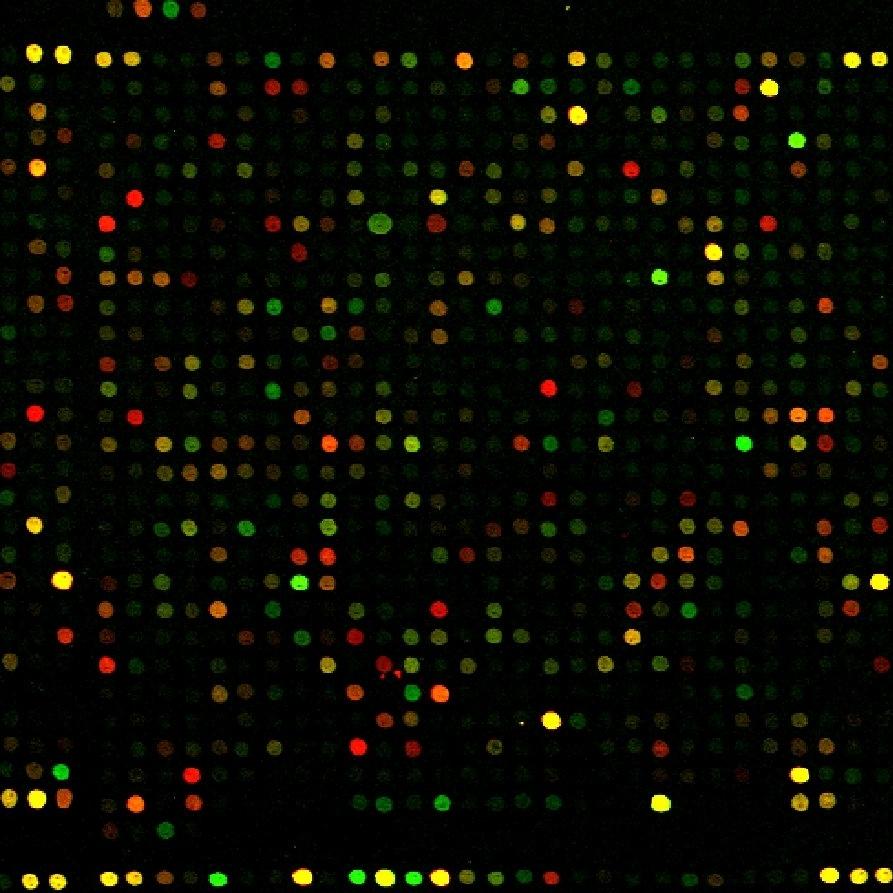 microarray.jpg