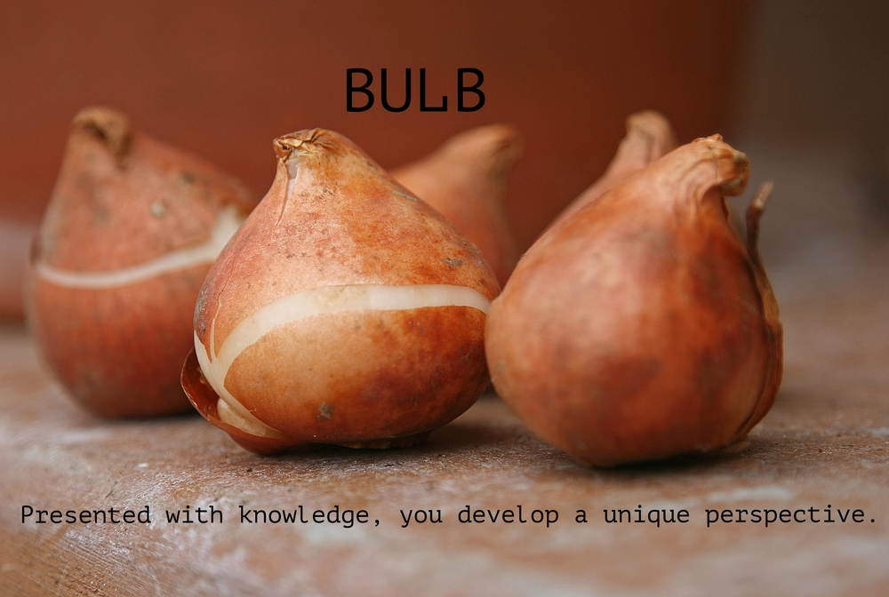 Tulip-bulbs-can-be-substituted-for-onions-in-recipes.jpg