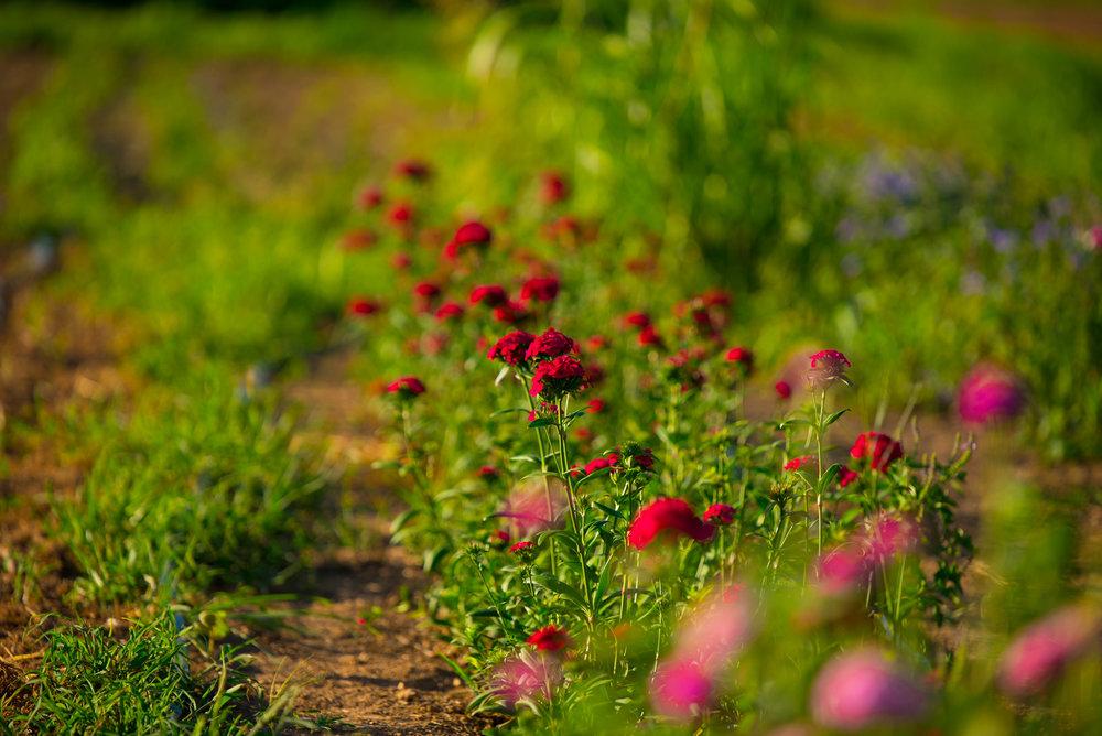 pure pollen_-21.jpg