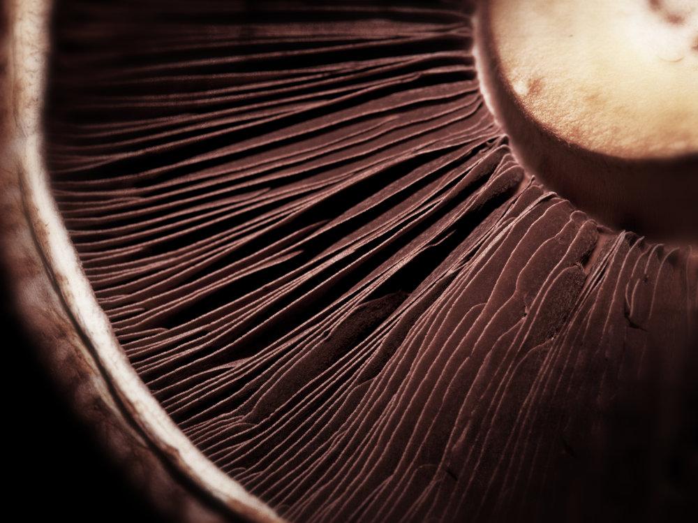 Mushroom frill