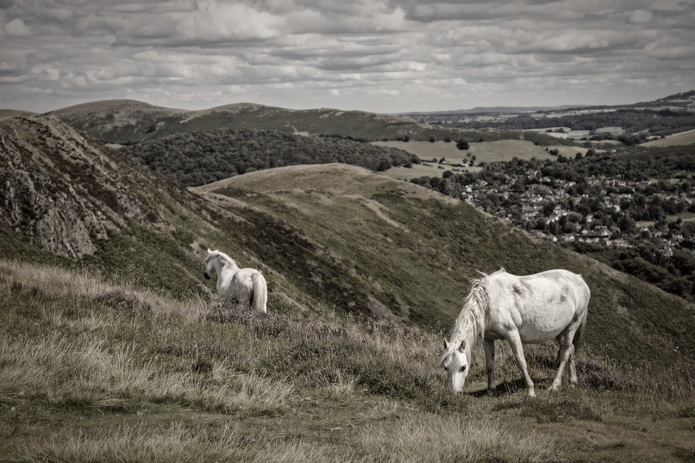 Long Mynd Horses One