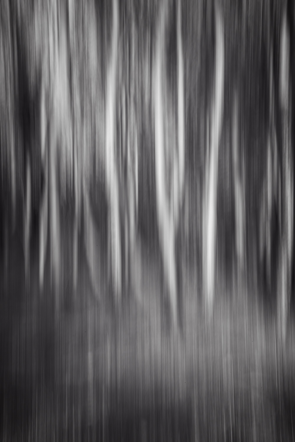 Mono tree dreams 1