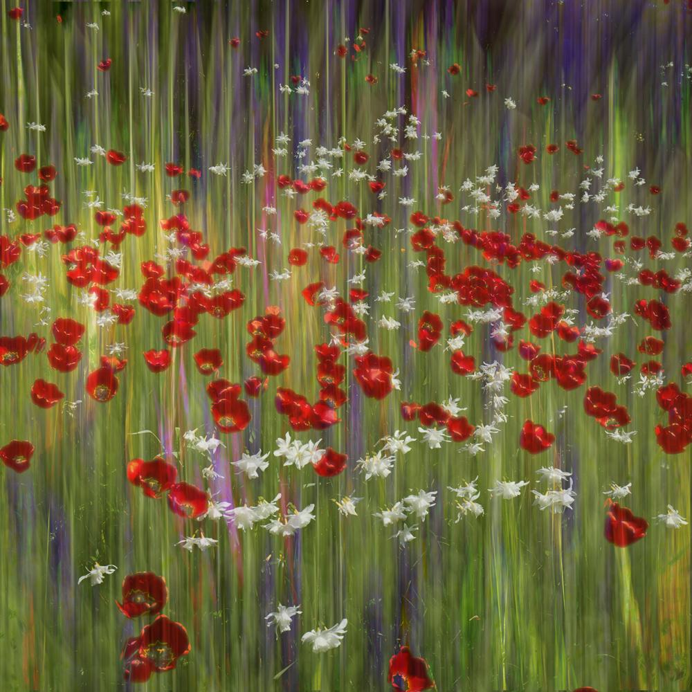 Floral dreams 1