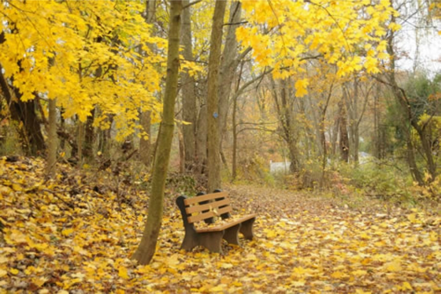 Teaneck Creek Conservancy Fall Bench with Yellow Leaves.jpg