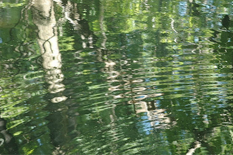 Teaneck Creek Conservancy Pond Reflection.jpg