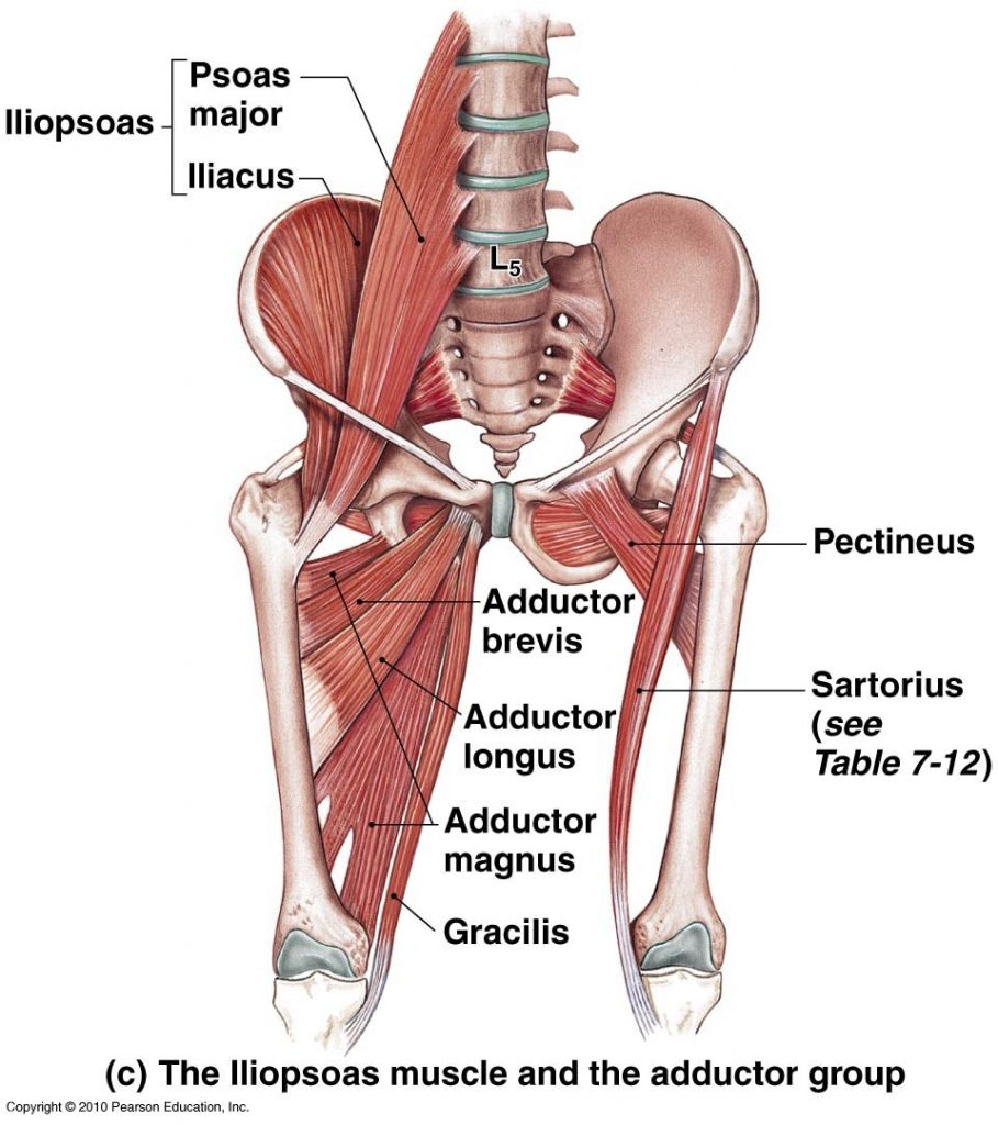 Not-So-Gross Anatomy: Hip Abductors and Adductors — b3 Wellness