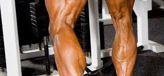 Well-defined set of calves shown here....
