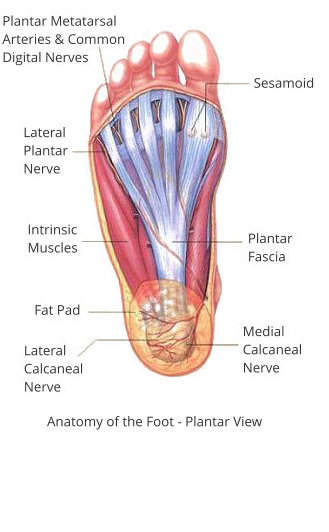 Plantar view of the foot (Theratape)