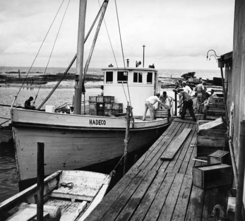 Loading Boat with Fish, Cape Hatteras, 1945