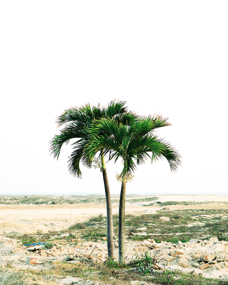 Palmen 2.jpg